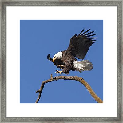Smooth Landing 6 Framed Print by David Lester