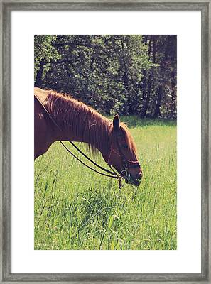 Snack Time Framed Print by Laurie Search