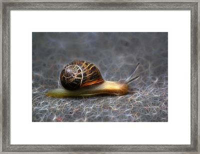 Snail Dreams Framed Print by Shane Bechler