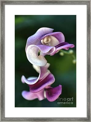 Snail Flower Framed Print by Joy Watson