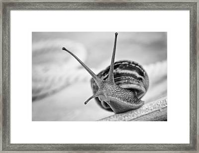 Snail Framed Print by Nailia Schwarz