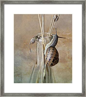 Snails Framed Print by Nailia Schwarz