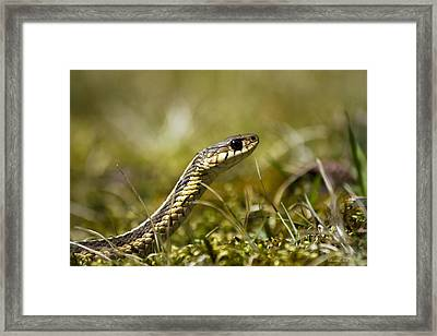 Snake Encounter Close-up Framed Print by Christina Rollo
