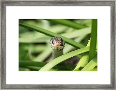 Snake In The Grass Framed Print by Jennifer E Doll