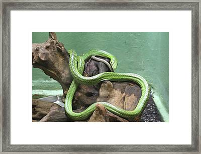 Snake - National Zoo - 01131 Framed Print by DC Photographer