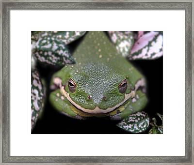 Snakefrog Framed Print by Joseph Tese