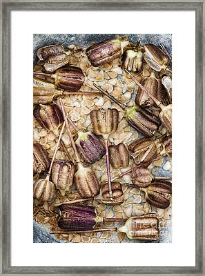 Snakes Head Fritillary Flower Seeds Pattern Framed Print by Tim Gainey