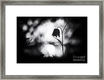 Snakes Head Fritillary Monochrome Framed Print by Tim Gainey