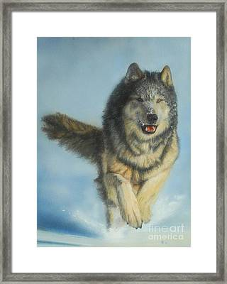 Snodog - Watercolor Framed Print by GD Rankin