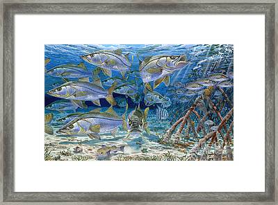 Snook Cruise In006 Framed Print by Carey Chen