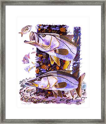 Snook Piling Framed Print by Carey Chen