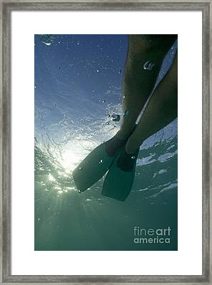 Snorkeller Legs With Flippers Underwater Framed Print by Sami Sarkis