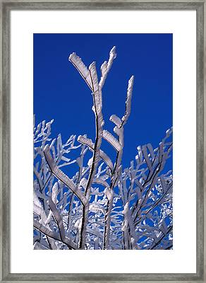Snow And Ice Coated Branches Framed Print by Anonymous