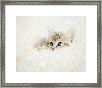 Snow Baby Framed Print by Amy Tyler