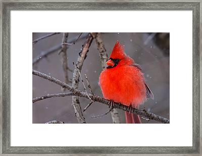 Snow Bird Framed Print by James Marvin Phelps