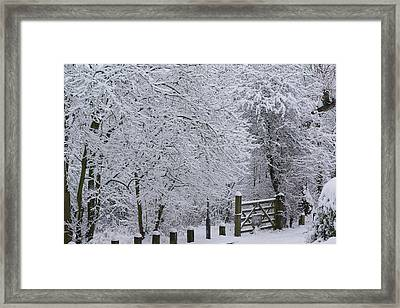 Snow Canopy Framed Print by David Birchall