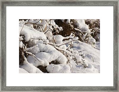 Snow Framed Print by Carol Lynch