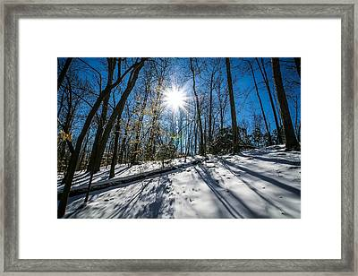Snow Covered Forest Framed Print by Alex Grichenko