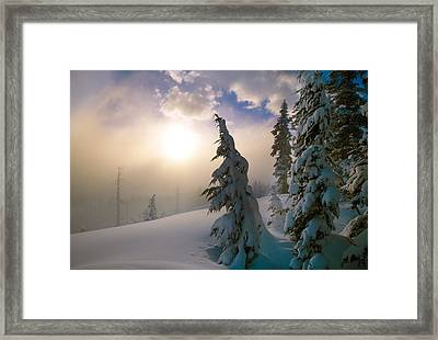Snow-covered Pine Trees, Sunrise Framed Print by Panoramic Images