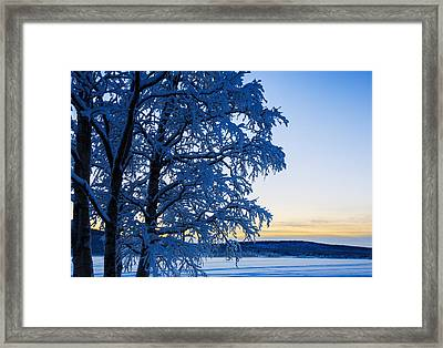 Snow Covered Trees In Extreme Cold Framed Print by Panoramic Images