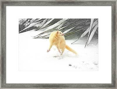 Snow Dance Framed Print by Nigel Espley