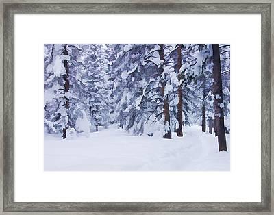 Snow-dappled Woods Framed Print by Don Schwartz