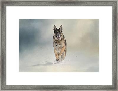 Snow Day For The Shepherd Framed Print by Jai Johnson