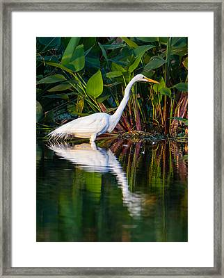 Snow Egret And Its Reflection Framed Print by Andres Leon