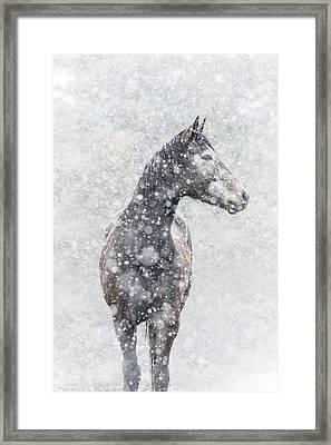 Snow Flurry Framed Print by Pamela Hagedoorn