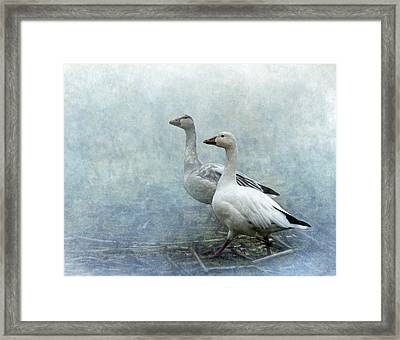 Snow Geese Framed Print by Angie Vogel