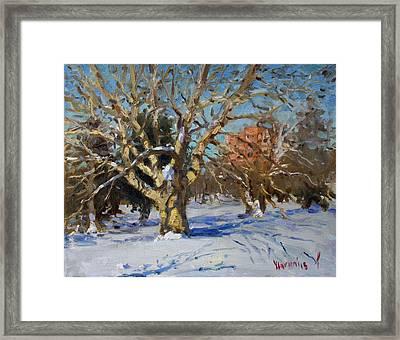 Snow In Goat Island Park  Framed Print by Ylli Haruni