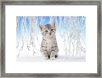 Snow Kitten Framed Print by Greg Cuddiford