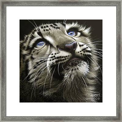 Snow Leopard Cub Framed Print by Jurek Zamoyski