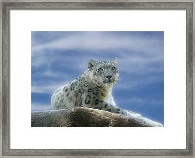 Snow Leopard Framed Print by Sandy Keeton