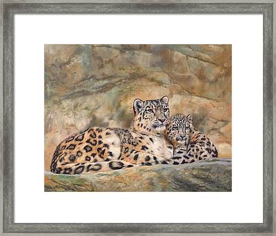 Snow Leopards Framed Print by David Stribbling