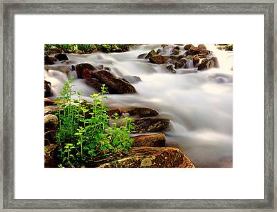 Snow Melt Framed Print by The Forests Edge Photography - Diane Sandoval