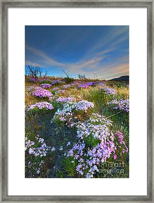 Snow Mountain Cloud Explosion Framed Print by Mike  Dawson