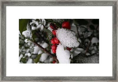 Snow On Holly Framed Print by V P Holmes