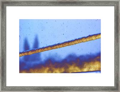Snow On Line Framed Print by Carol Lynch