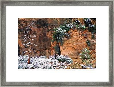 Snow On Trees Framed Print by Panoramic Images