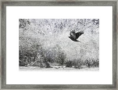 Snow Storm With Crow Framed Print by Theresa Tahara