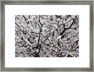 Snow Tree Framed Print by Carol Lynch