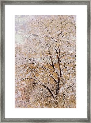 Snow Tree  Framed Print by Kathy Bassett