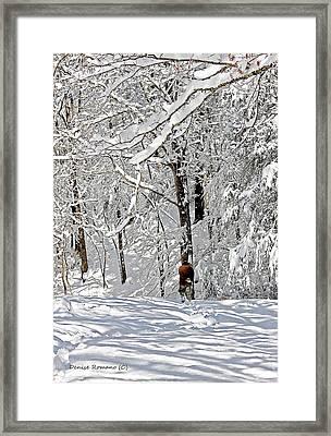 Snow Walking Framed Print by Denise Romano
