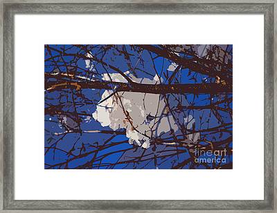 Snowball Framed Print by Carol Lynch
