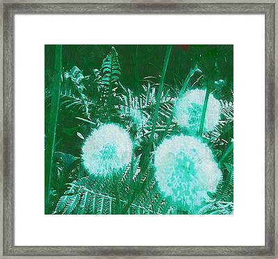 Snowballs In The Garden Framed Print by Pepita Selles