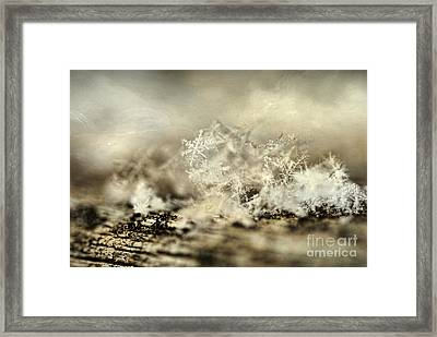 Snowflakes Framed Print by Darren Fisher