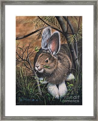 Snowshoe Rabbit Framed Print by Ricardo Chavez-Mendez