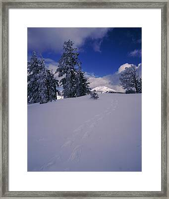 Snowshoe Tracks On Snow, Mt. Scott Framed Print by Panoramic Images