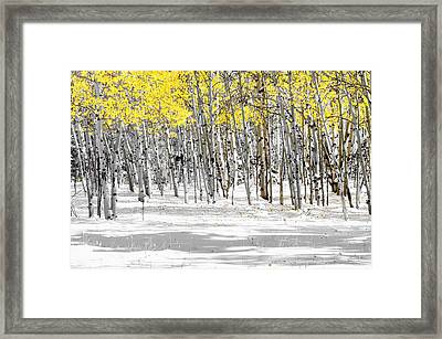 Snowy Aspen Landscape Framed Print by The Forests Edge Photography - Diane Sandoval